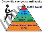Come regolare ed accelerare il metabolismo
